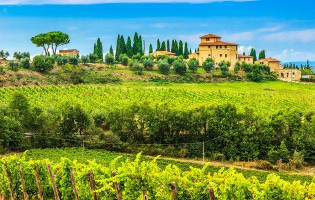 toscana vineyard